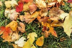 Hojas de otoño en la tierra Fotografía de archivo