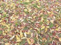 Hojas de otoño en la tierra Foto de archivo