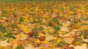 Hojas de otoño en la tierra almacen de video