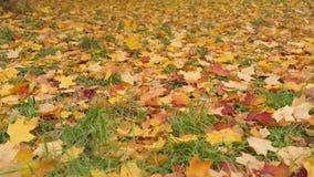 Hojas de otoño en la tierra metrajes