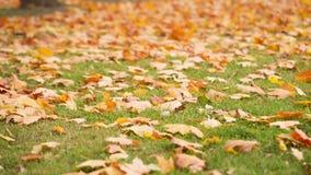 Hojas de otoño en la tierra almacen de metraje de vídeo