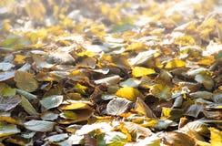 Hojas de otoño en la tierra Imagen de archivo