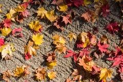 Hojas de otoño en la tierra fotos de archivo