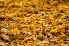 Hojas de otoño en la tierra Foto de archivo libre de regalías