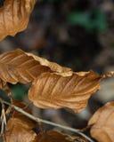 Hojas de otoño en la tierra/fuera del fondo del foco fotografía de archivo libre de regalías