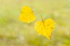 Hojas de otoño en la ventana lluvia-mojada Foto de archivo libre de regalías