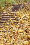 Hojas de otoño en las escaleras de los pasos de progresión concretos Fotografía de archivo libre de regalías