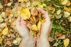 Hojas de otoño en las manos Fotografía de archivo