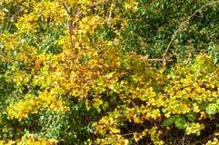Hojas de otoño en los árboles Imagen de archivo