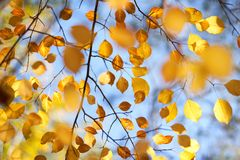 Hojas de otoño en los árboles Fotos de archivo libres de regalías