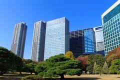 Hojas de otoño en los jardines de Hamarikyu, Tokio Foto de archivo libre de regalías
