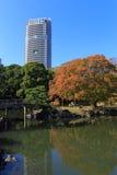 Hojas de otoño en los jardines de Hamarikyu, Tokio Fotografía de archivo