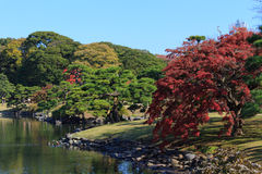 Hojas de otoño en los jardines de Hamarikyu, Tokio Fotos de archivo libres de regalías