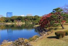 Hojas de otoño en los jardines de Hamarikyu, Tokio Fotografía de archivo libre de regalías
