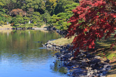 Hojas de otoño en los jardines de Hamarikyu, Tokio Foto de archivo
