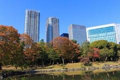 Hojas de otoño en los jardines de Hamarikyu, Tokio Imagen de archivo libre de regalías