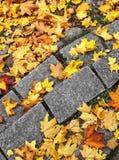 Hojas de otoño en los pasos de progresión de piedra Imagen de archivo