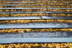 Hojas de otoño en los pasos de progresión de piedra Foto de archivo libre de regalías