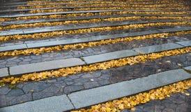 Hojas de otoño en los pasos de progresión de piedra Fotos de archivo