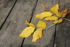 Hojas de otoño en los viejos tableros Fotos de archivo