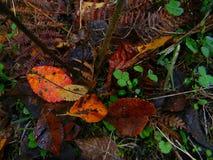Hojas de otoño en medio de los nuevos brotes imágenes de archivo libres de regalías
