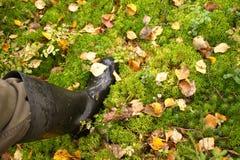 Hojas de otoño en musgo en el bosque Fotos de archivo