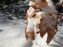 Hojas de otoño en nieve foto de archivo
