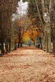 Hojas de otoño en parque Foto de archivo libre de regalías