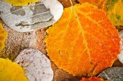 Hojas de otoño en piedras Imagen de archivo libre de regalías