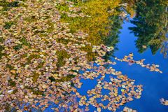 Hojas de otoño en superficie del agua Foto de archivo libre de regalías