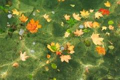 Hojas de otoño en superficie del agua Imagen de archivo