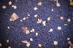 Hojas de otoño en textura mojada del asfalto con la ilustración fondo, estacional imagen de archivo