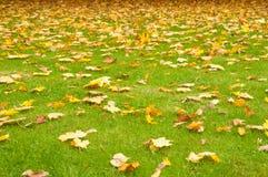 Hojas de otoño en un césped verde Fotos de archivo libres de regalías