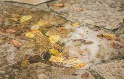 Hojas de otoño en un charco Imagen de archivo libre de regalías