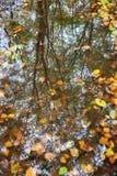 Hojas de otoño en un charco con el refelction de la más forrest Imágenes de archivo libres de regalías