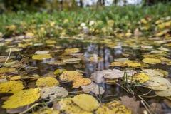 Hojas de otoño en un charco de la lluvia Primer Foto de archivo