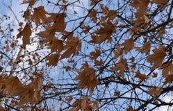 Hojas de otoño en un día brillante Imagen de archivo libre de regalías