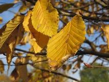 Hojas de otoño en un día frío soleado Imágenes de archivo libres de regalías