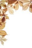 Hojas de otoño en un fondo blanco Imágenes de archivo libres de regalías