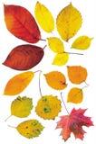 Hojas de otoño en un fondo blanco Fotografía de archivo
