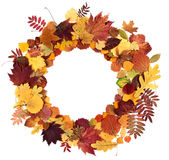 Hojas de otoño en un fondo blanco Fotos de archivo