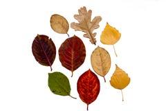 Hojas de otoño en un fondo blanco Foto de archivo libre de regalías