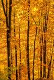 Hojas de otoño en un fondo claro del cielo Vista vertical del otoño imágenes de archivo libres de regalías