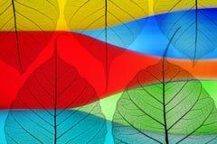 Hojas de otoño en un fondo del color Fotografía de archivo
