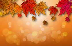 Hojas de otoño en un fondo del otoño Fotografía de archivo
