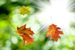 Hojas de otoño en un fondo del sol Imagen de archivo libre de regalías