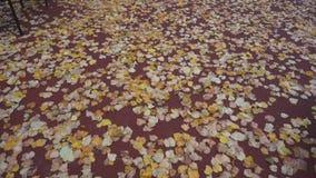 Hojas de otoño en un fondo rojo
