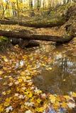 Hojas de otoño en una cama de la corriente Fotos de archivo libres de regalías