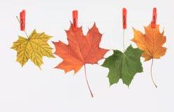 Hojas de otoño en una cuerda de lino Fotografía de archivo