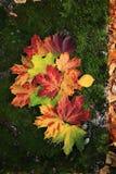 Hojas de otoño en una piedra demasiado grande para su edad con el musgo Foto de archivo libre de regalías